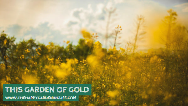 This Garden Of Gold