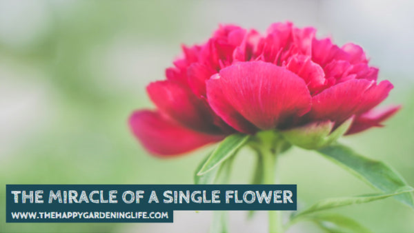 The Miracle Of A Single Flower