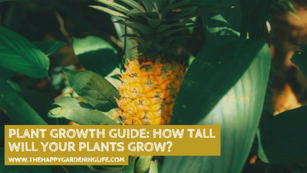 Plant Growth Guide: How Tall Will Your Plants Grow?