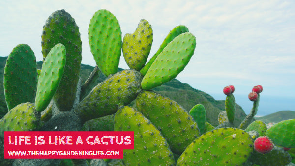 Life Is Like A Cactus