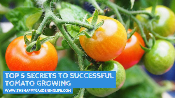 Top 5 Secrets to Successful Tomato Growing
