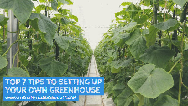 Top 7 Tips to Setting Up Your Own Greenhouse