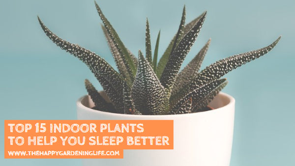 Top 15 Indoor Plants to Help You Sleep Better