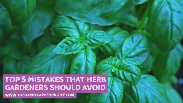 Top 5 Mistakes That Herb Gardeners Should Avoid