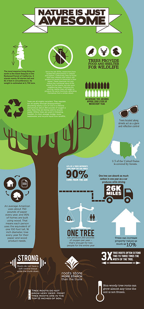 amazing-facts-about-trees