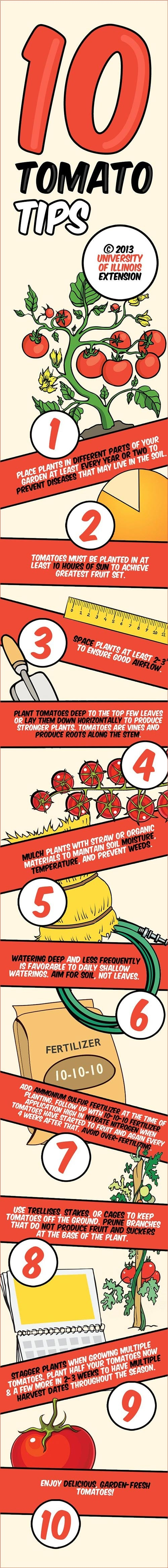 best-tomato-planting-tips