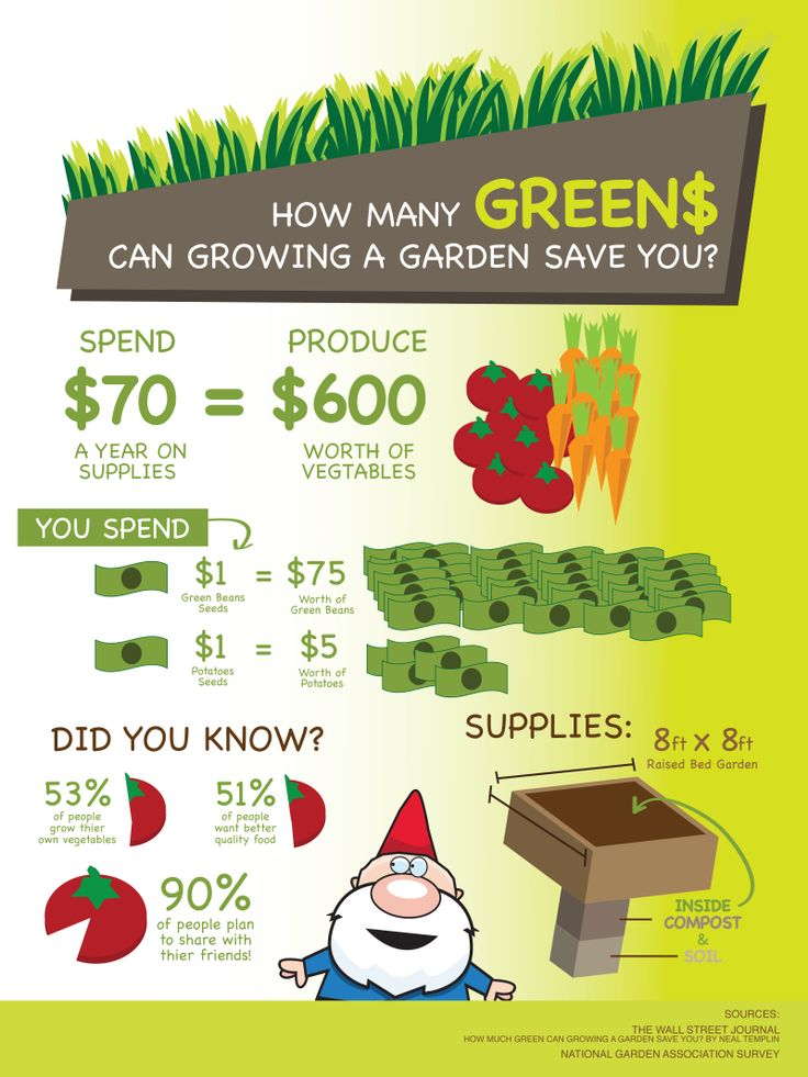 grow vegetables save money