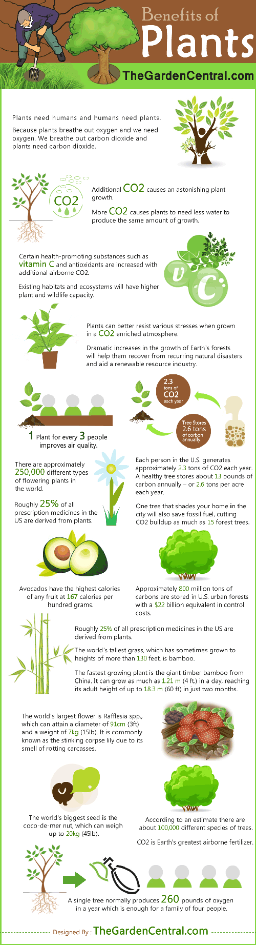 plant facts and information