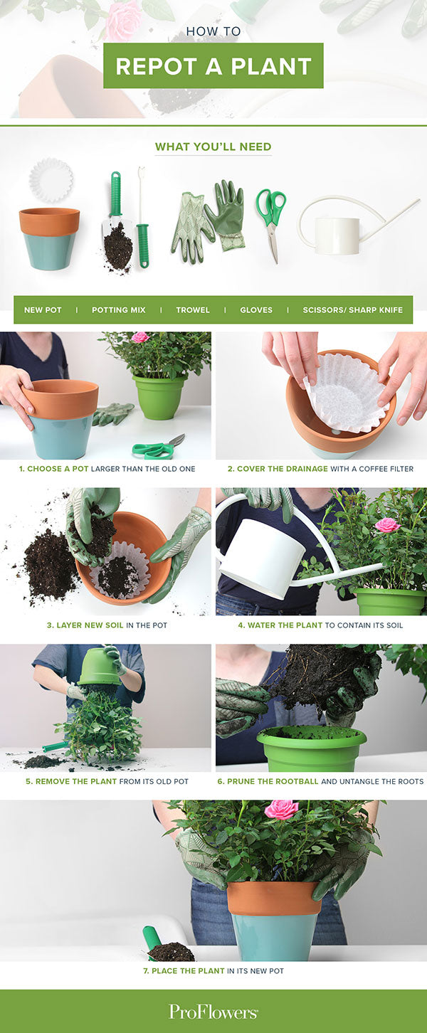 steps-to-repot-a-plant