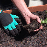 claw gloves transplanting