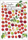 Apples of Eastern North America – Poster