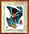 Blue Butterfly 16 x 20 Framed Giclee Print