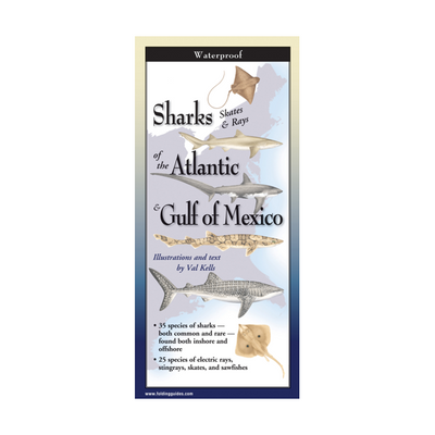 Sharks, Skates, and Rays of the Atlantic & Gulf of Mexico
