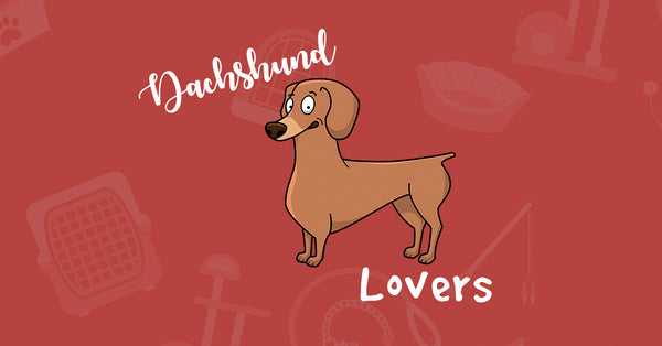 Browse our Special Dachshund Lovers Selection