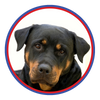 Browse our Rottweiler Collection