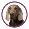 Browse our Weimaraner Collection