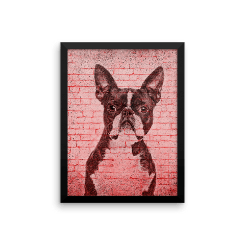 Boston Terrier On Wall Framed Poster