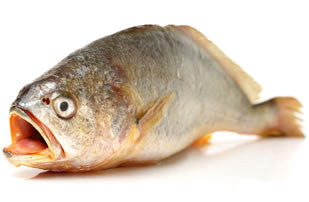 Fresh Seafood - Doma - Croaker - Home Delivery Pune - Online Butcher - EasyMeat
