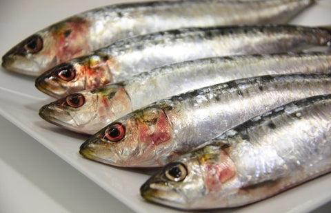 Fresh Seafood - Sardine - EasyMeat - Home Delivery Pune