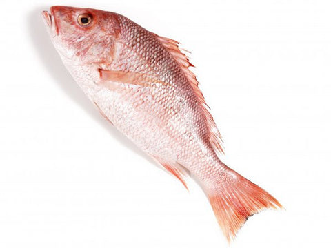 Fresh Red Snapper - Seafood - Easy meat - Home Delivery Pune