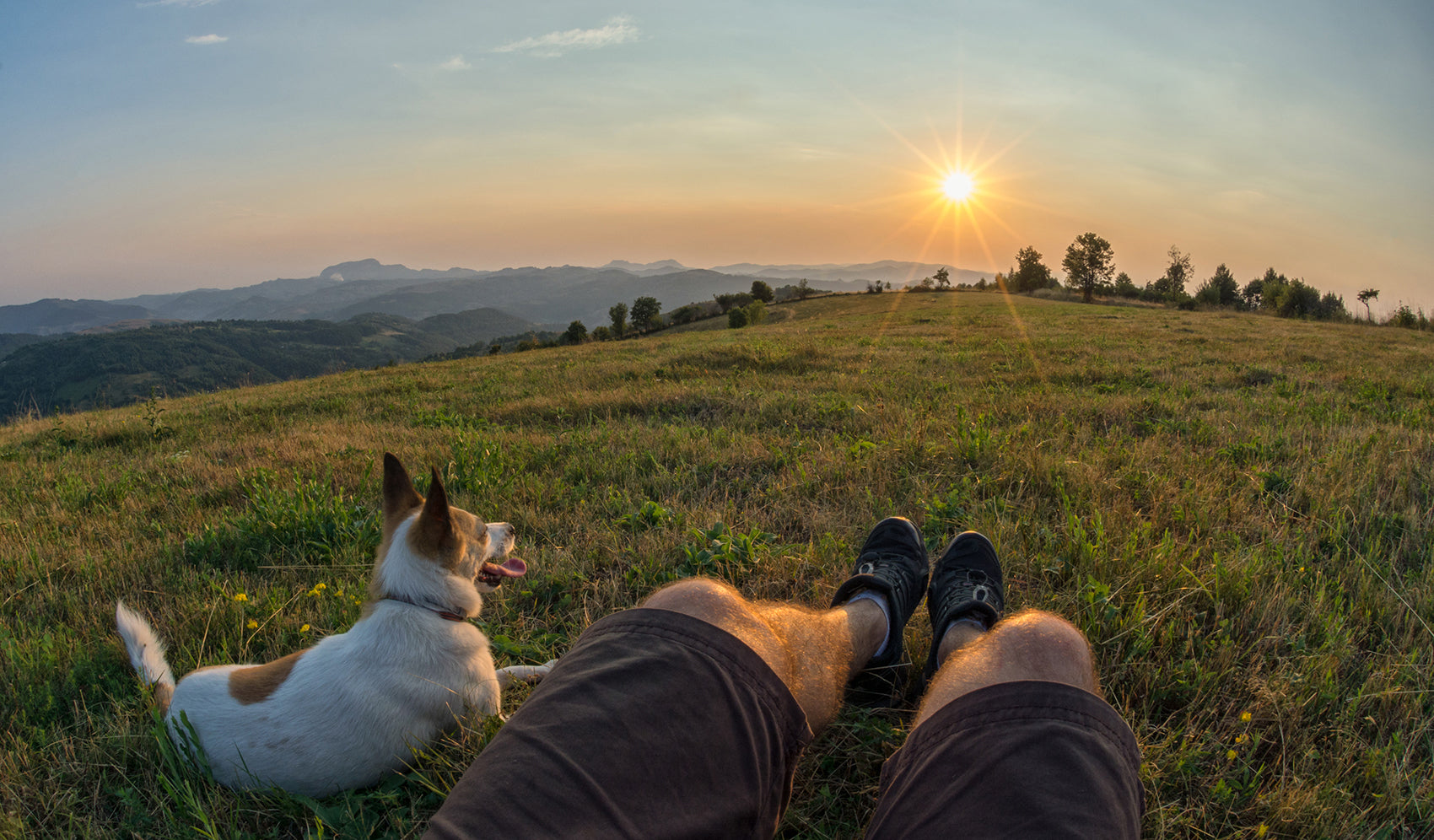 dog with a male owner lying on a hill overlooking sunset