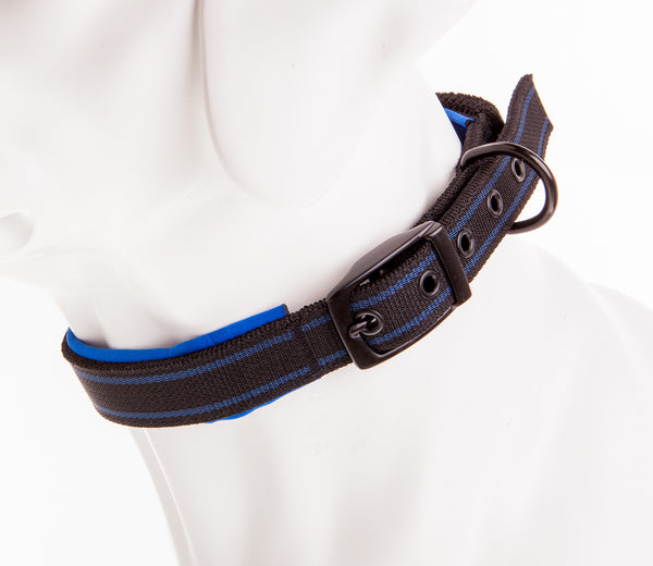dog mannequin wearing black and blue bungee dog collar