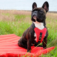 french bulldog sitting on a red travel bed
