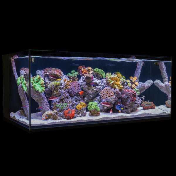 C-Vue All-In-One Aquariums - AIO