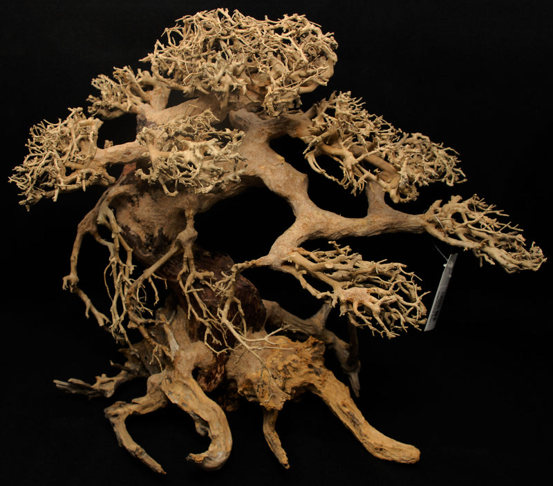 Spider Root Wood - 22lbs
