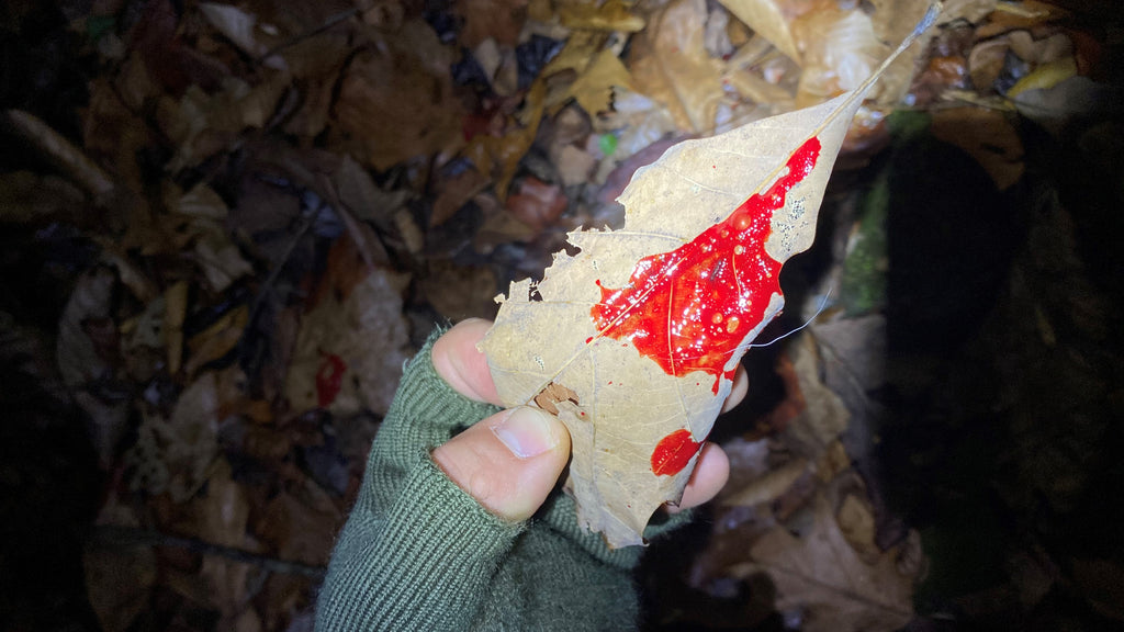 Blood Tracking: Surefire Tips And Rules To Blood Trail a Deer