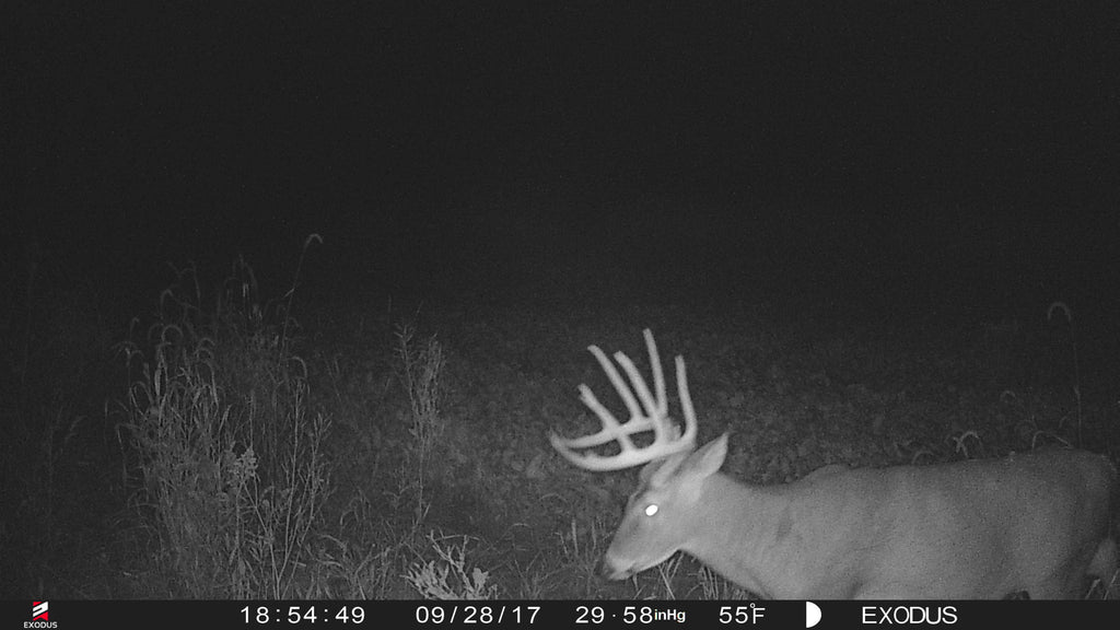 What do nocturnal trail camera pictures mean?