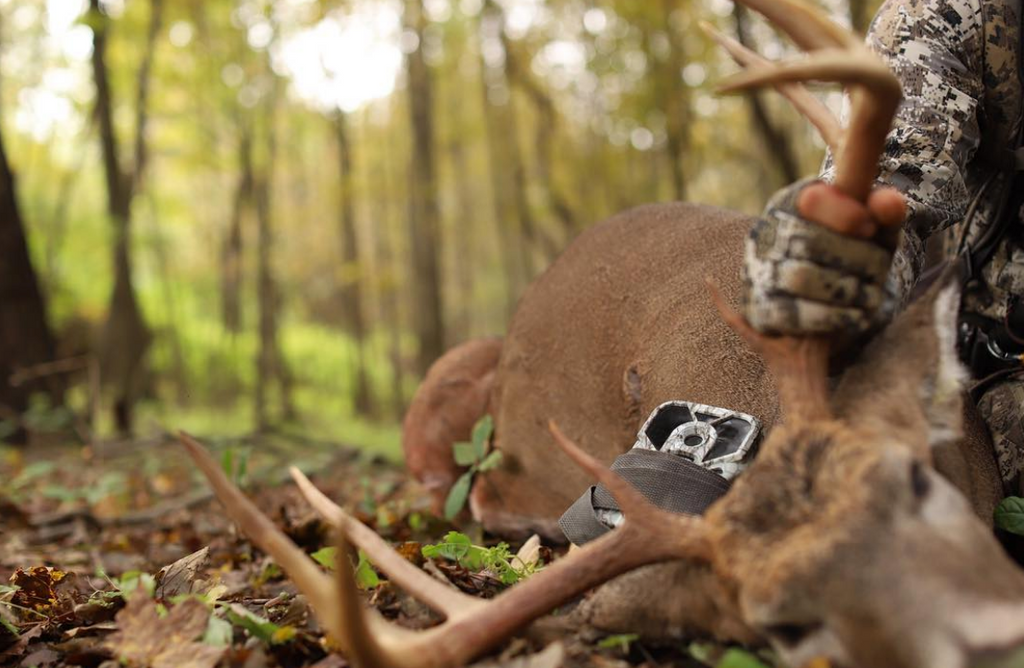 Effectively Using Trail Cameras During The Rut