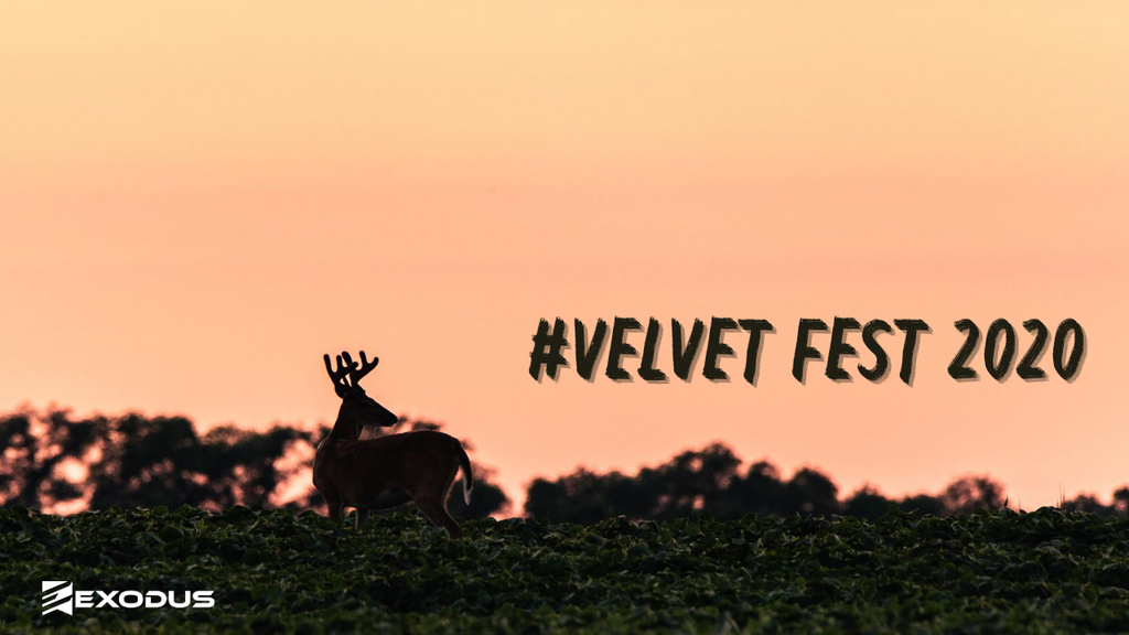 Everything You Need to Know About #VelvetFest 2020
