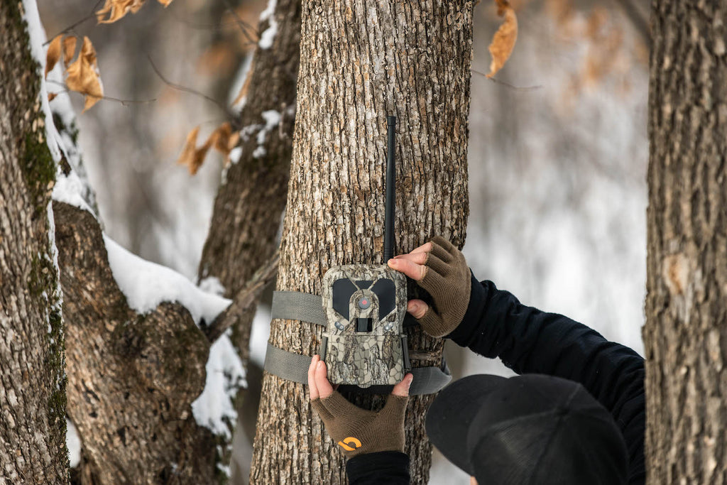 How To Use Cellular Trail Cameras for Deer Hunting