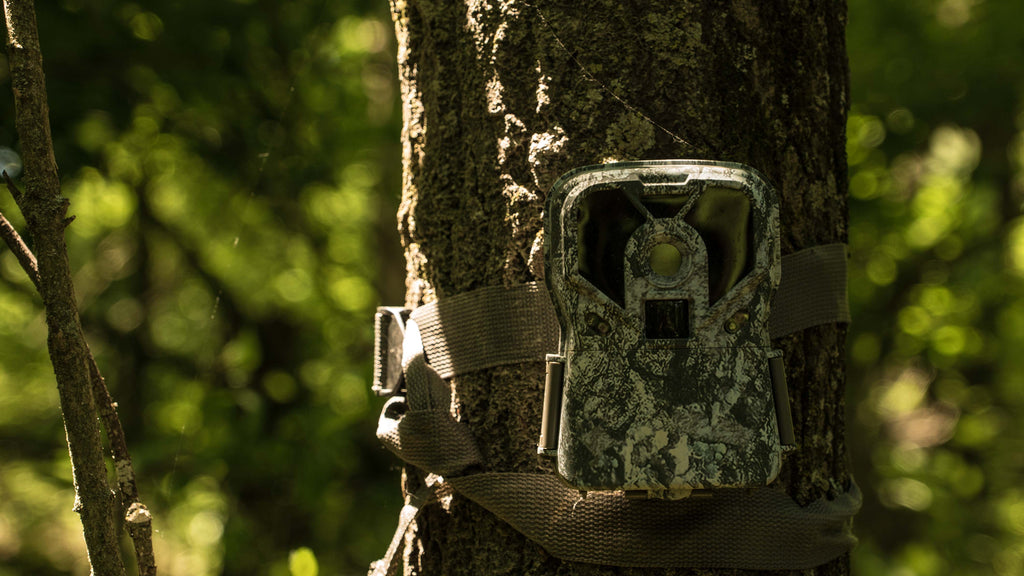 How To Increase Daytime Trail Cam Pictures