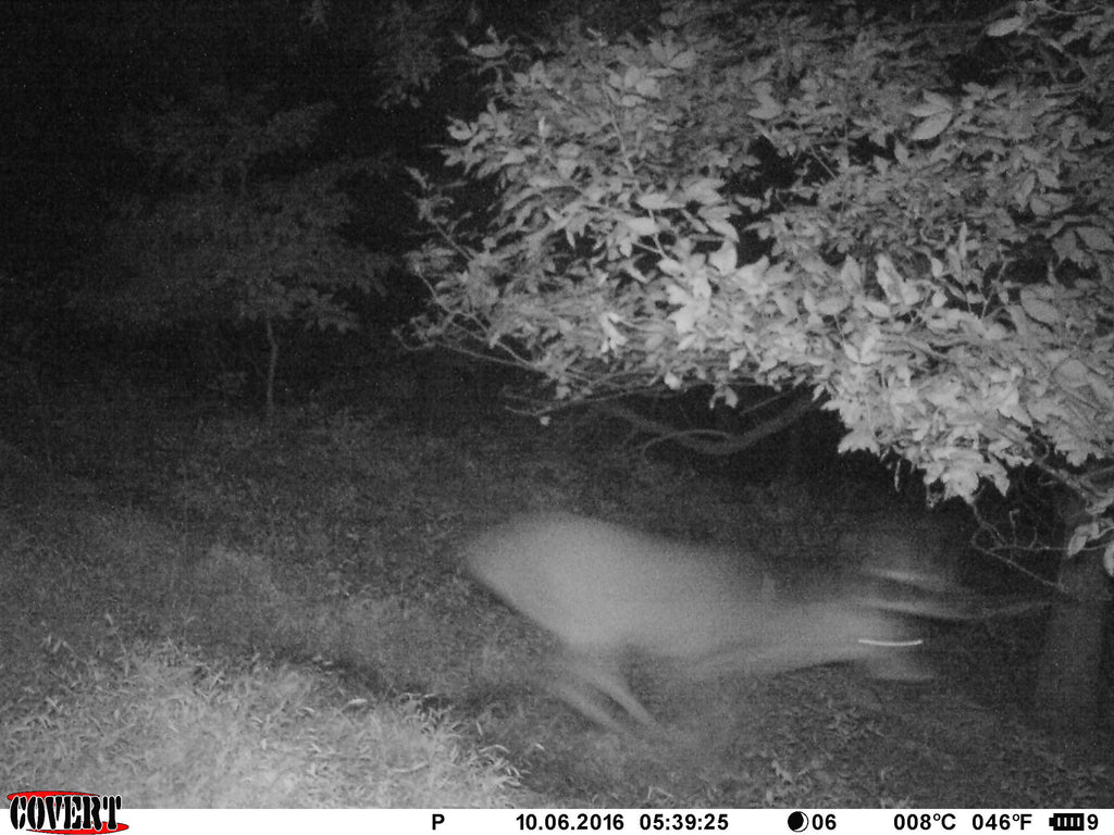 Do Trail Cameras Spook Deer?