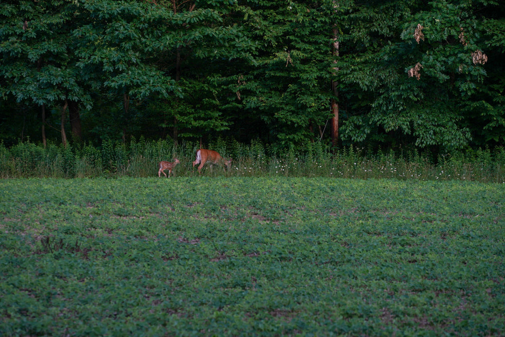 SO YOU WANT TO...PLANT A FOODPLOT? FOODPLOTTING, TRAIL CAMERAS, AND STAND LOCATIONS