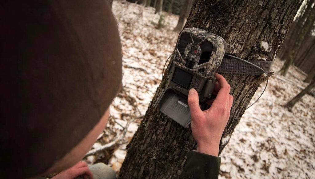 How Often Should I Check My Trail Cameras?