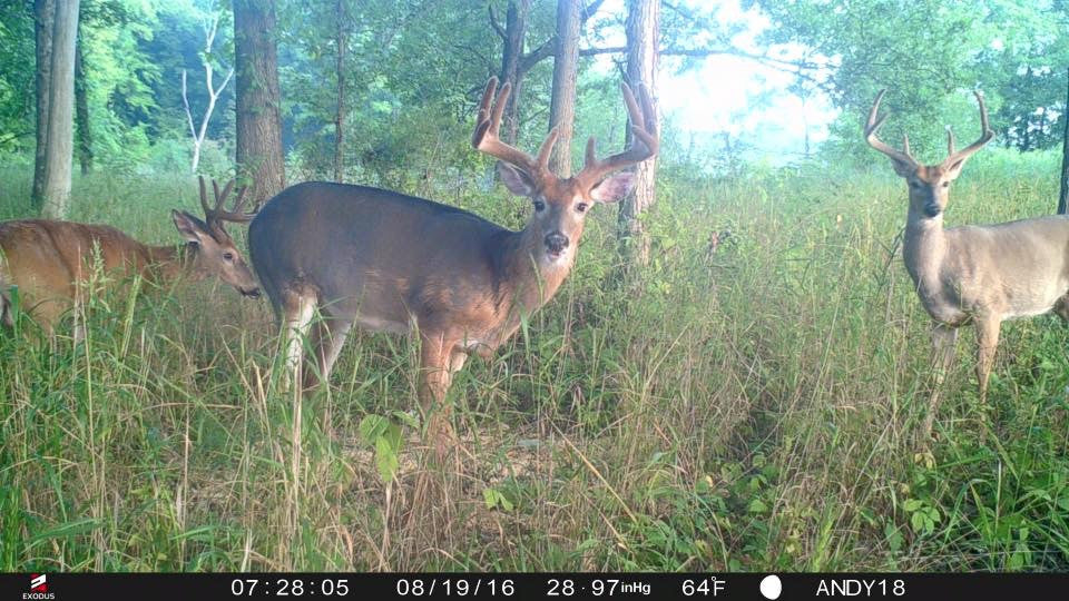 5 Important Trail Camera Features