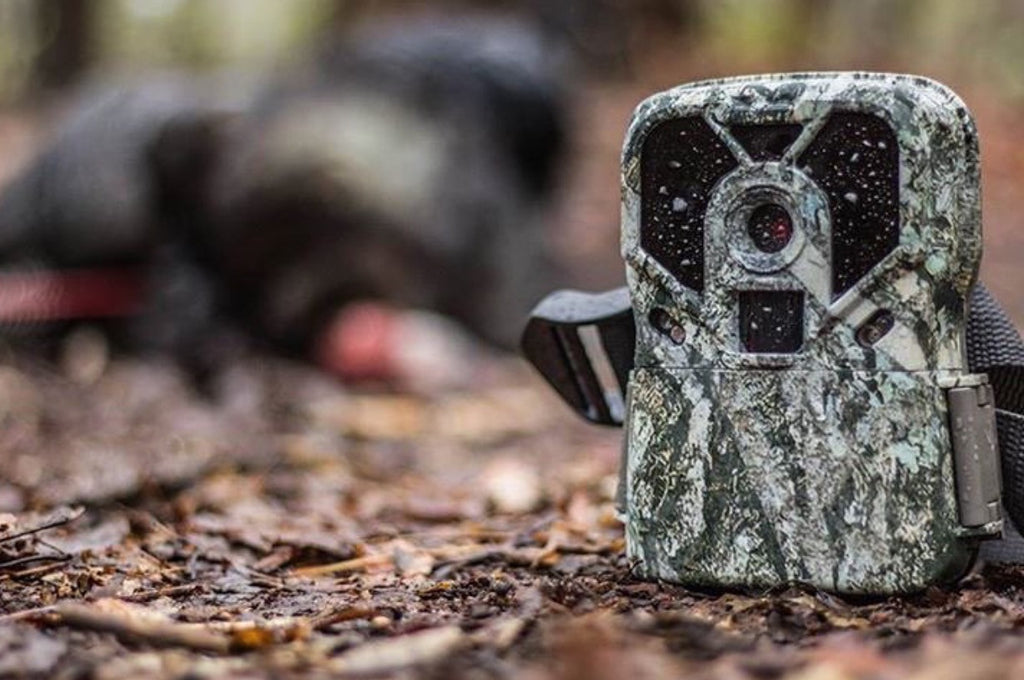 Scouting For Spring Turkeys With Trail Cameras
