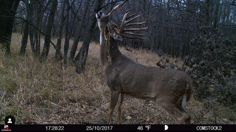 trail-camera-scrape