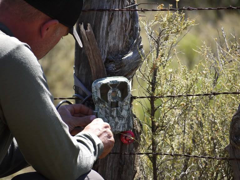 checking-trail-cameras-too-often