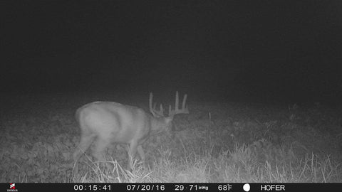 trail-camera-field-edges
