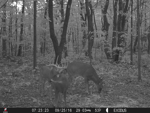 placing-trail-cameras