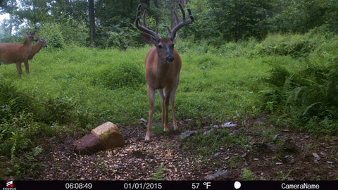 trail-camera-bait-pile