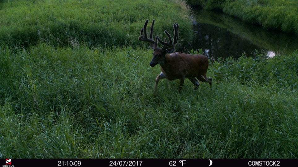 Minerals and big whitetails