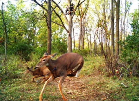 trail-camera-filming-hunts