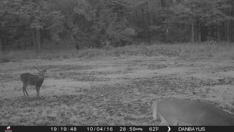 field-edge-trail-cam-photos