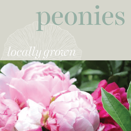 Locally Grown - Peonies