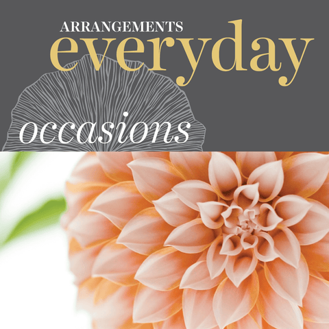 Occasions - Everyday